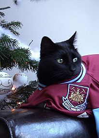 Morris: Cat and West Ham fan