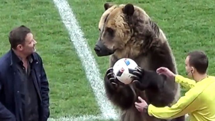 Tim the bear performed before the Russian third-tier match between Mashuk-KMV and Angusht