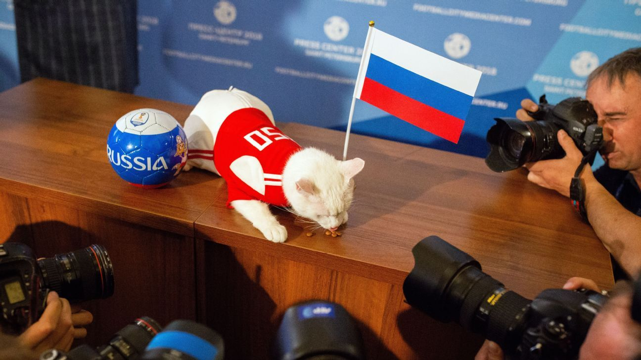 Achilles the cat picks Russia to win World Cup opener