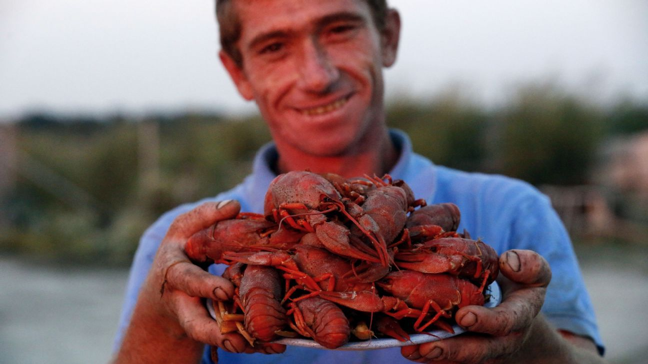 Crayfish are a staple in the Rostov region, with fishermen regularly working in the Don river to bring home more.