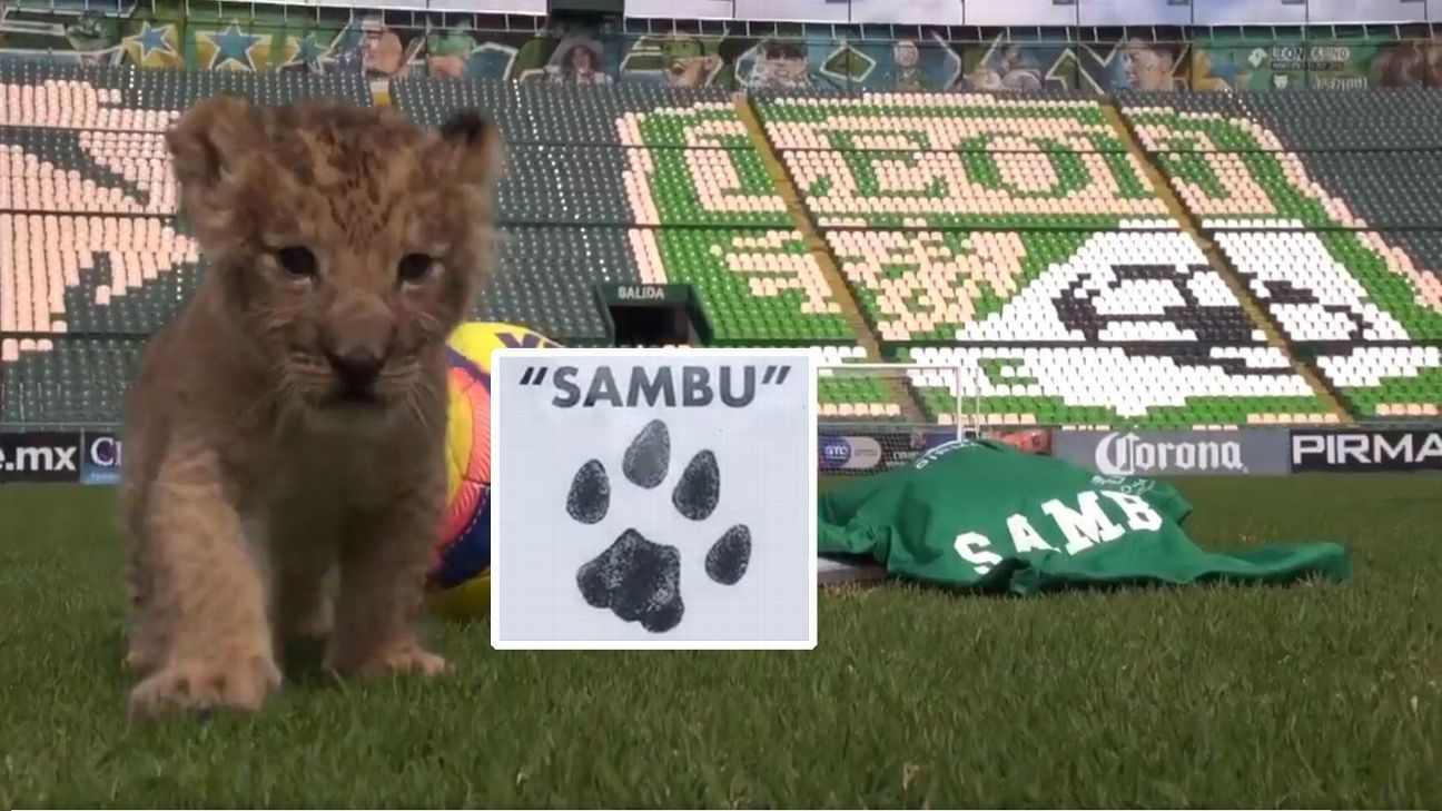 Sambu the lion cub was named after Club Leon midfielder Rubens Sambueza