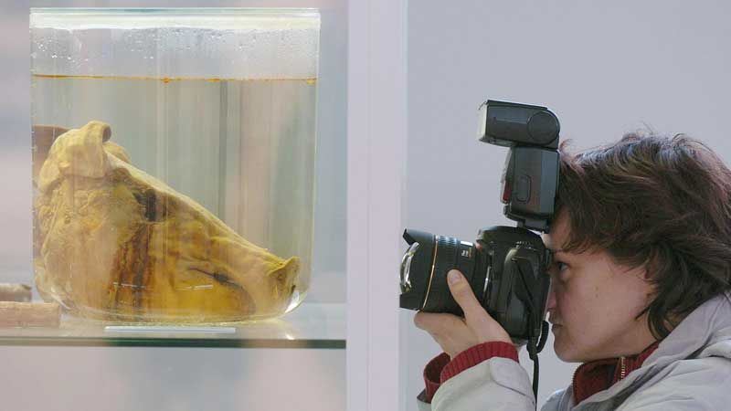 The preserved pig's head was used in an exhibition entitled 'Cult Scene Stadium'
