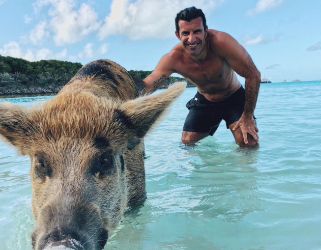 Figo enjoys a swim with some pigs.