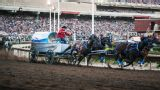 Calgary Stampede - Chuckwagon Racing (Day 4)