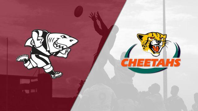Sharks vs. Cheetahs (Super Rugby)