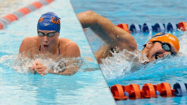 Florida vs. Auburn (NCAA Swimming & Diving)
