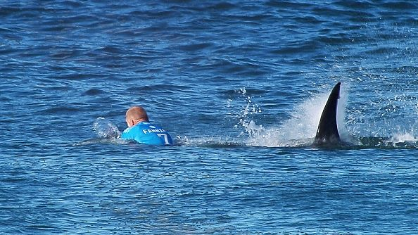 Surfing champ recalls fighting off great white shark