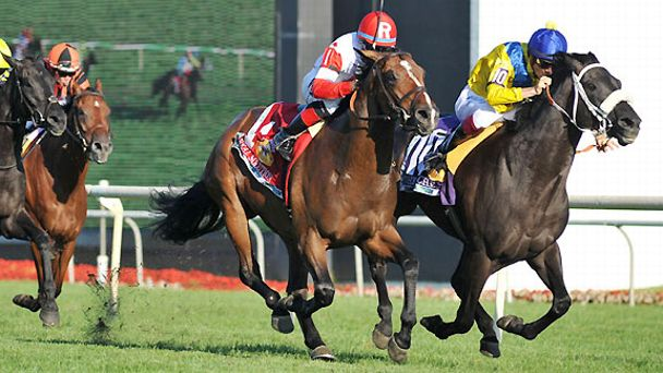 Real Solution, left, wins the 2013 Arlington Million after the disqualification of The Apache.