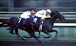 1989 Breeders' Cup Classic