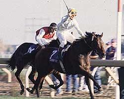 1996 Breeders' Cup Turf