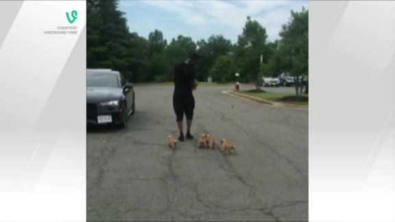 Video - Breeland rolls into training camp with furry friends