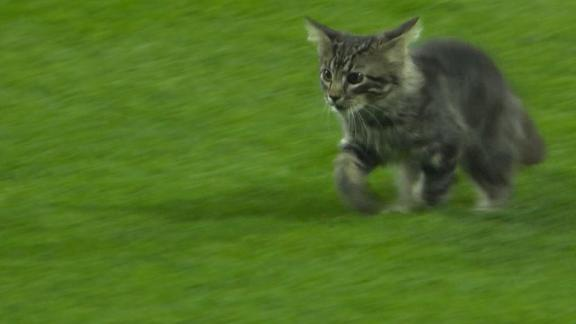 Adorable cat rallies Cardinals past Royals