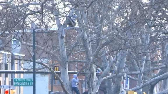 Fan gets prime position for Eagles parade up a tree