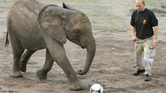 Germany will beat France, Elephant predicts