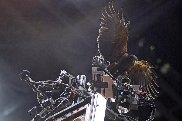 Spirit the Hawk