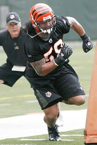 ap photo david kohl cincinnati linebacker rey maualuga will be given