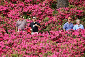 Azaleas at Augusta National