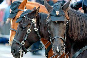 San Francisco police horse