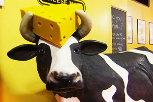 Cheesehead Cow