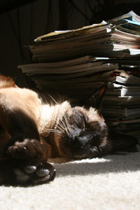 Swisher's cat Murray basks in the glow of one of the most important skateboard magazine collections ever.