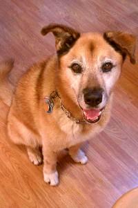 TMQ Dog Rocky