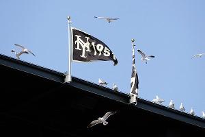 Seagulls at AT&T Park