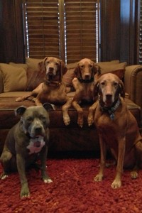 Mark Buehrle's dogs