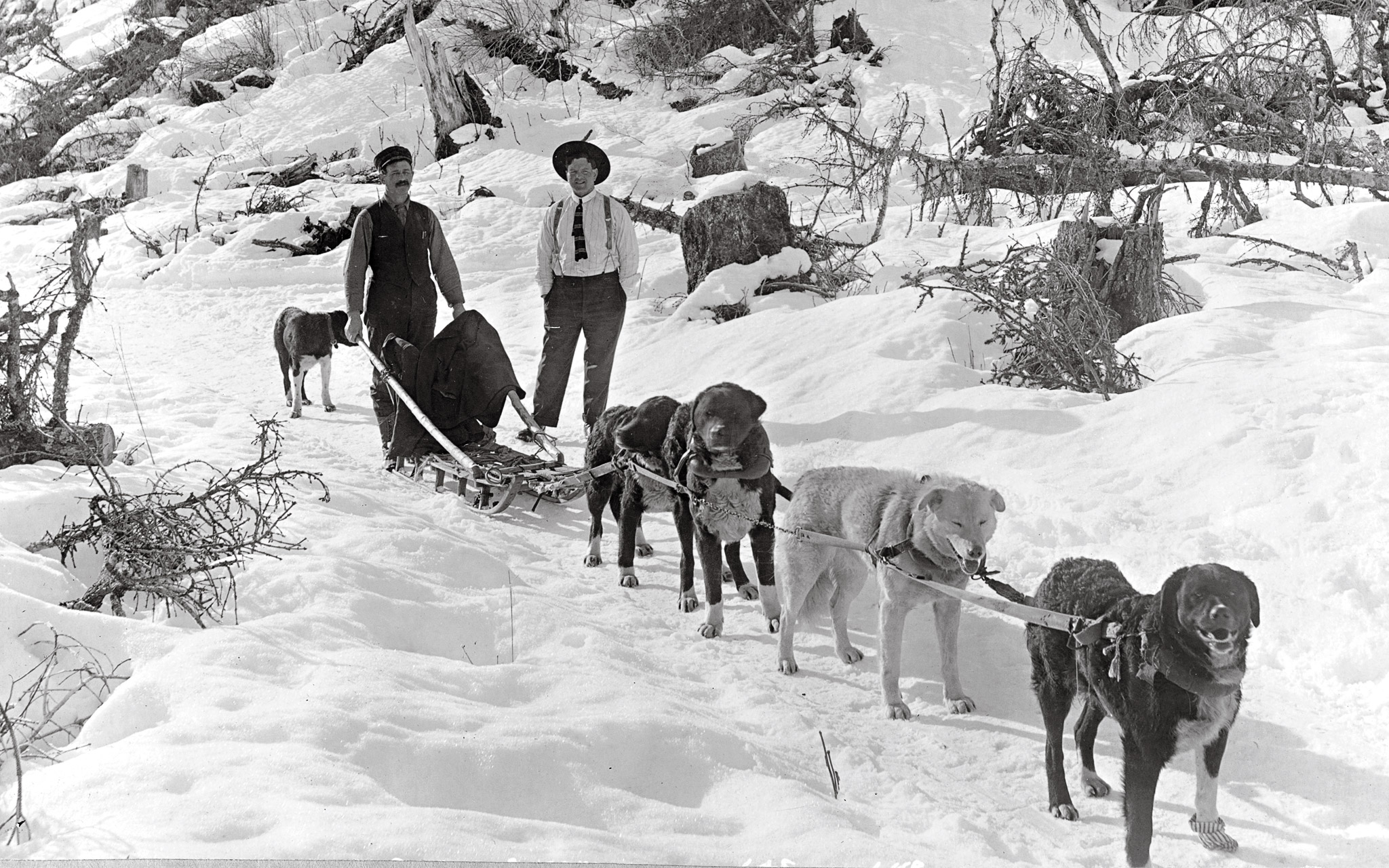 Image result for sled dogs historical