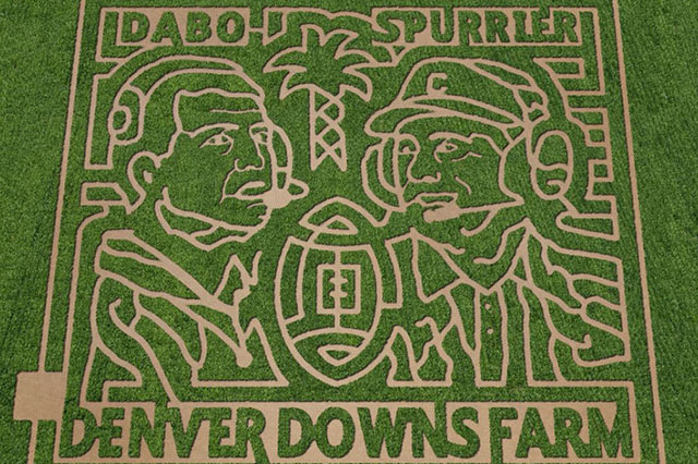Denver Downs Corn Maze