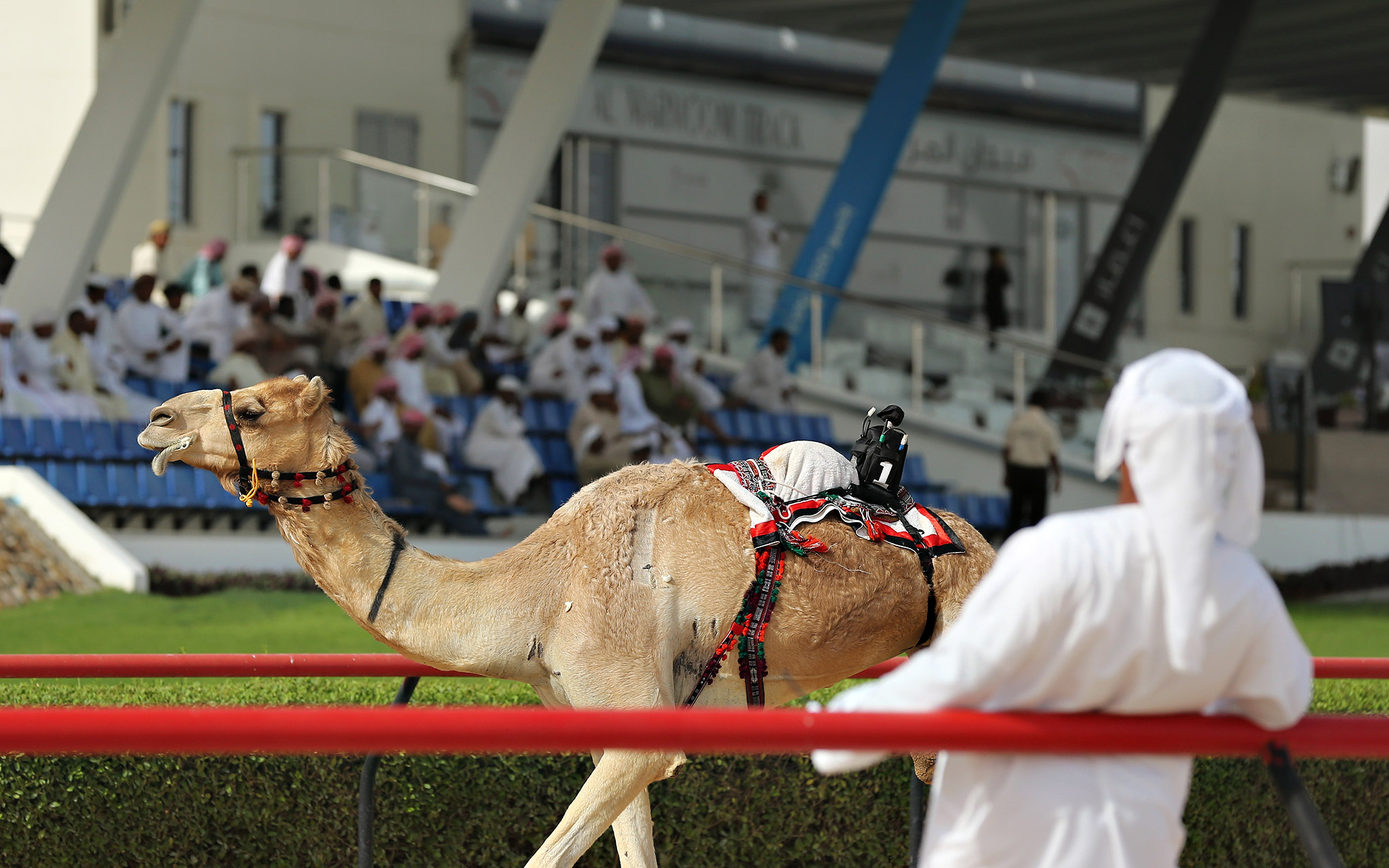Camel At The Races