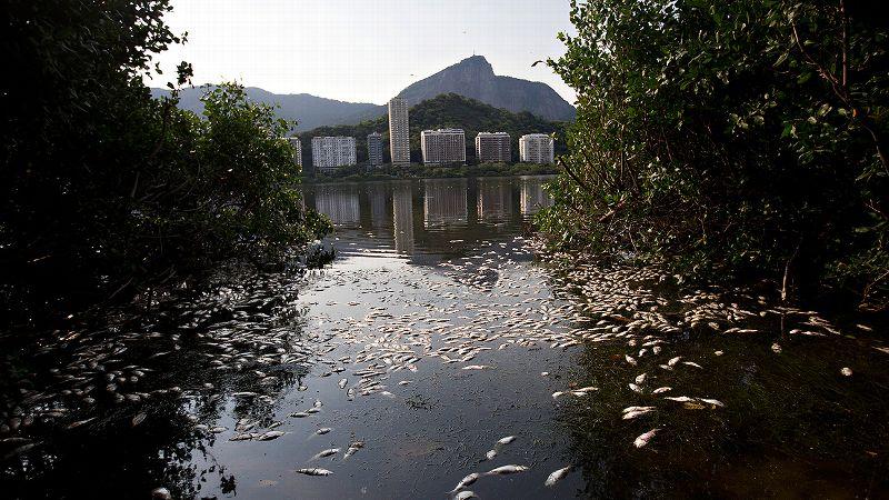 Rio Dead Fish