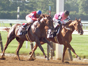 Affirmed and Alydar battle in the stretch of the 1978 Belmont Stakes.