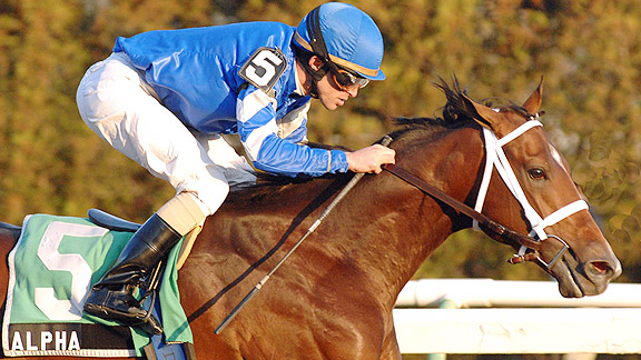 Alpha wins the 2012 Count Fleet Stakes at Aqueduct.
