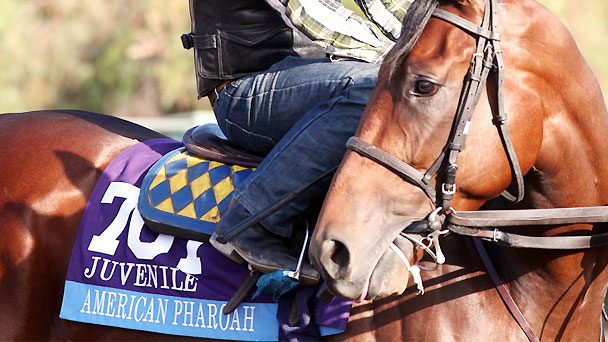 American Pharoah works for the 2014 Breeders' Cup Juvenile.