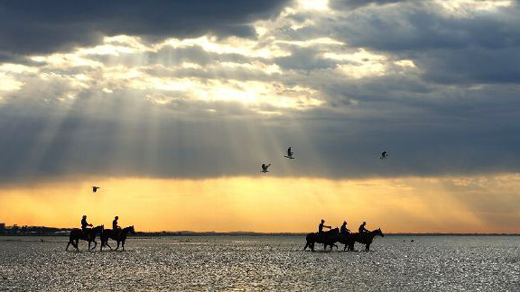 Track riders from the Gai Waterhouse stable including 'Glencandam Gold' walk in the ocean during a horse recovery session ahead of the Melbourne Cup.