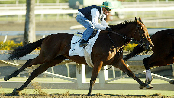 Beholder gets in some work at Santa Anita Park ahead of the 2012 Breeders' Cup.