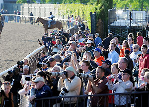 A crowd gathers around to watch horses work at Belmont Park.