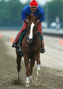 California Chrome gets some work over the Belmont track