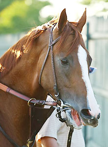 California Chrome goes for a Triple Crown in the Belmont Stakes.