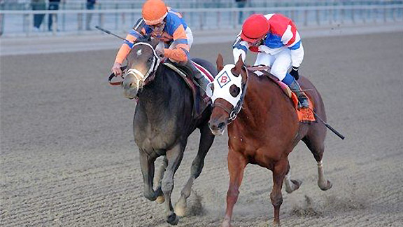Stay Thirsty wins the 2012 Cigar Mile Handicap at Aqueduct.