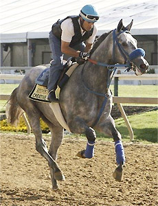 Creative Cause works for the 2012 Preakness Stakes.