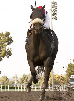 Eblouissante, a half-sister to superstar Zenyatta, wins her debut at Hollywood Park.