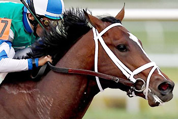 Jockey John Velazquez rides Materiality to victory in the 2015 Florida Derby.