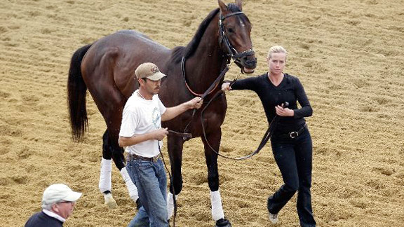 Orb prepares for the 2013 Preakness Stakes.