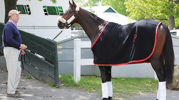 Kentucky Derby winner Orb prepares to ship from Belmont Park to Pimlico for the Preakness Stakes.