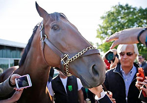 American Pharoah meets his fans after winning the Triple Crown.