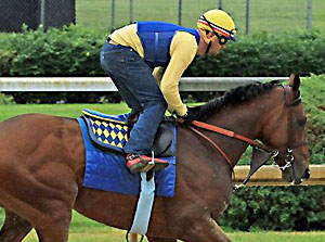 Kentucky Derby and Preakness Stakes winner American Pharoah works at Churchill Downs.