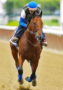 Kentucky Derby and Preakness Stakes winner American Pharoah works ahead of the Belmont Stakes.
