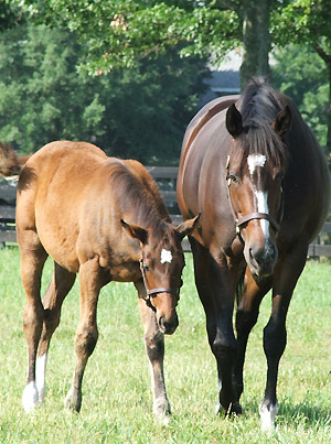 Rachel Alexandra and her foal by Curlin