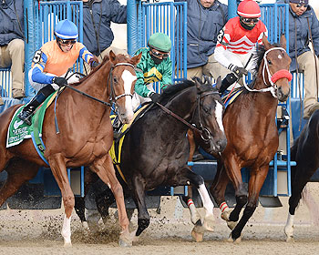 Honor Code, center, at the start of the 2013 Remsen Stakes.